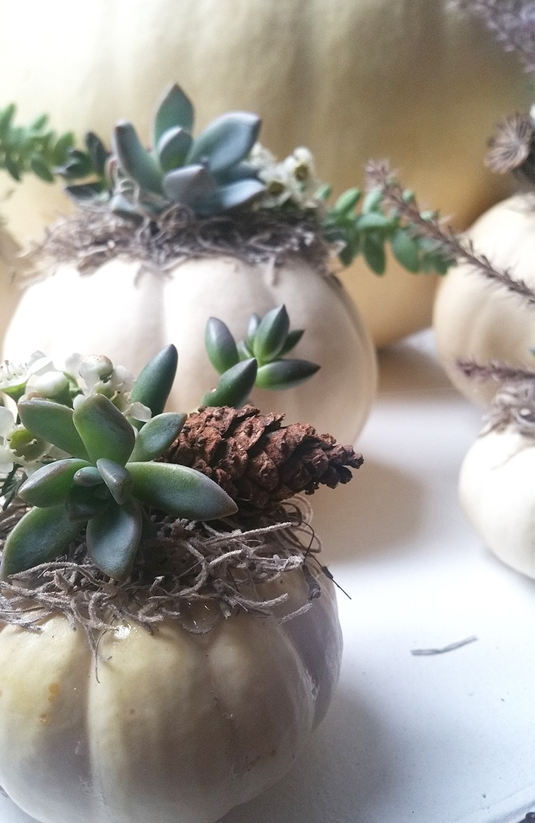 Mini White Pumpkin Centerpieces