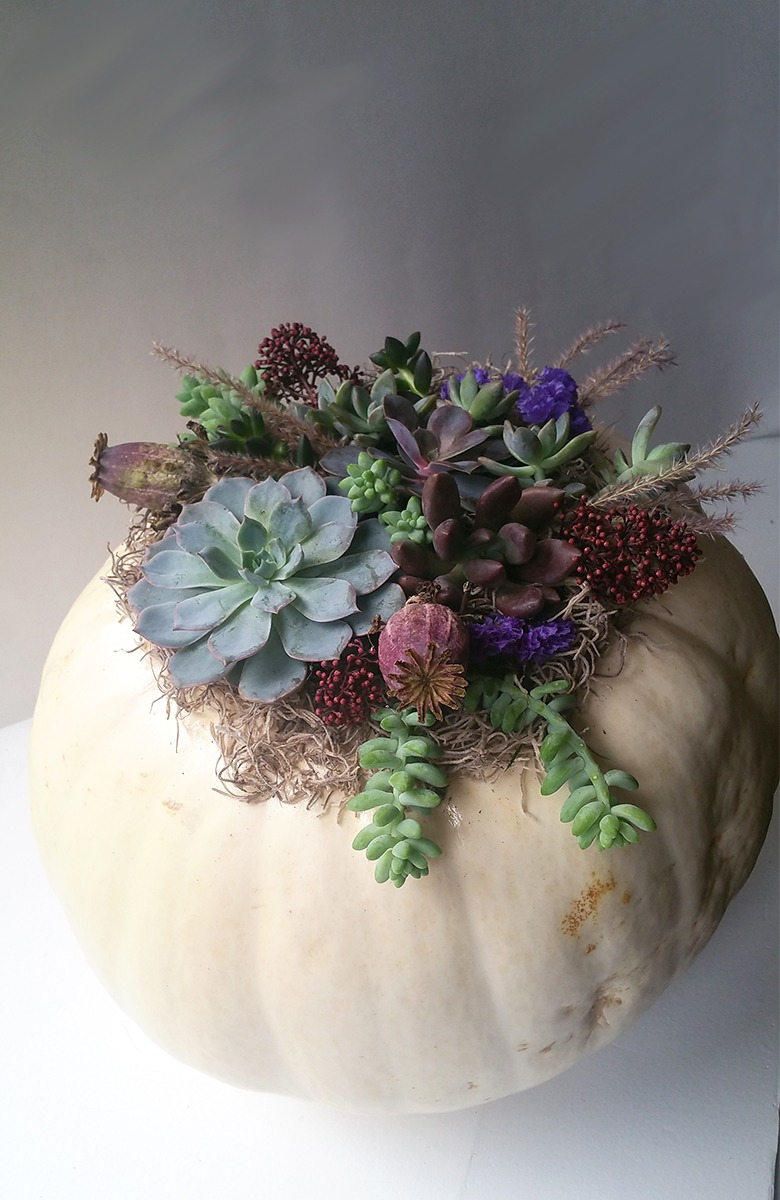 DIY White Pumpkin and Succulent Centrepiece