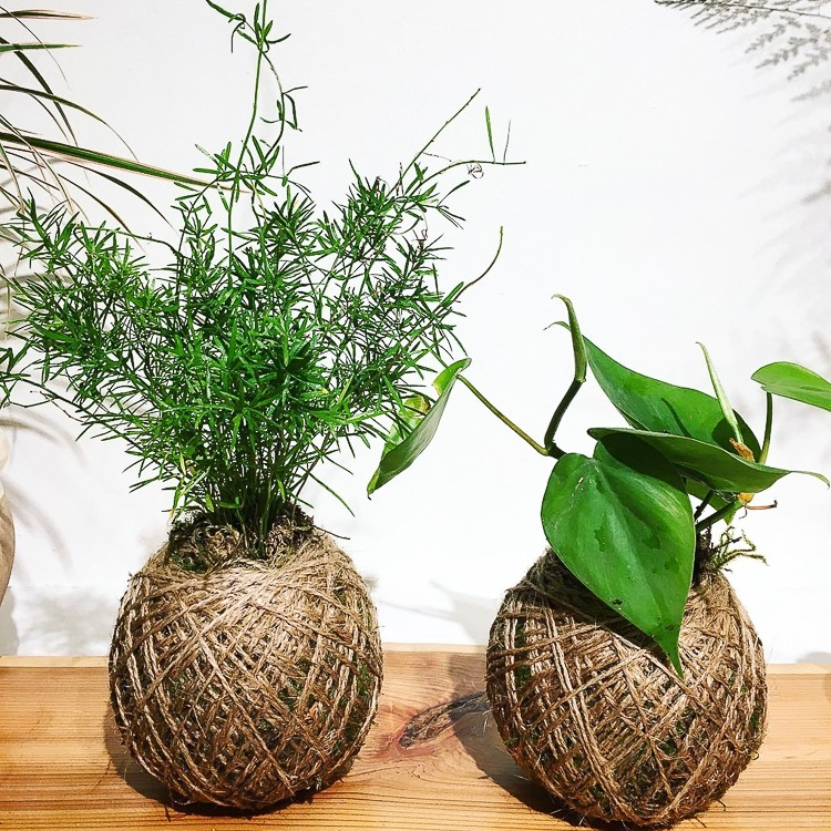 Drift and Grow plants Vancouver