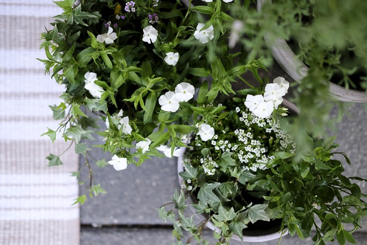 summer plants for a front stoop makeover