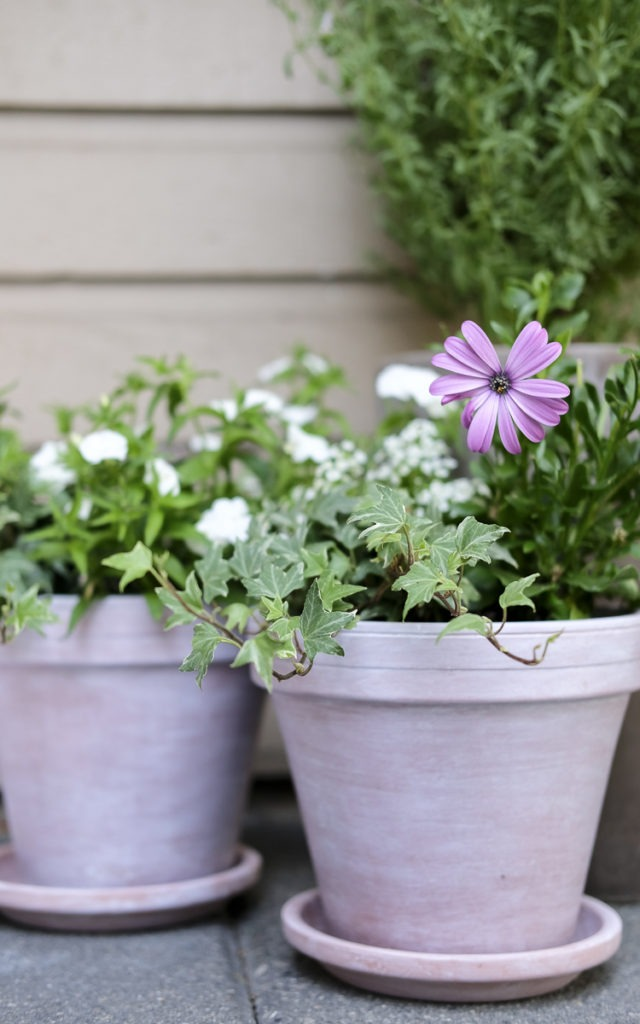 summer flowers for front stoop decor